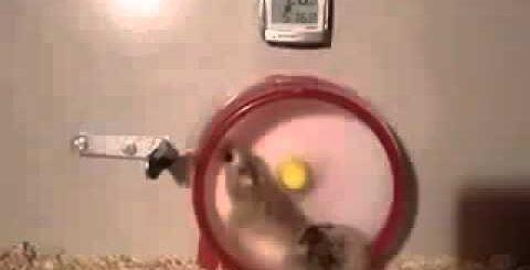 Хомяки Смешные видео приколы