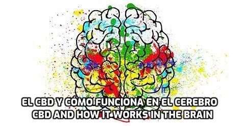 El CBD y como funciona en el Cerebro