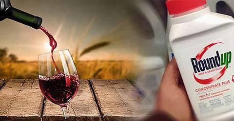 Roundup dans le vin