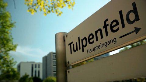 Immobilienfilm Tulpenfeld 480x270 - Beispielfilme nach Genre