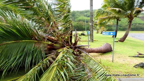 Chute de cocotier