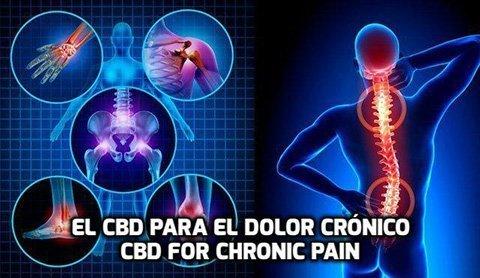 El CBD para el Dolor Crónico