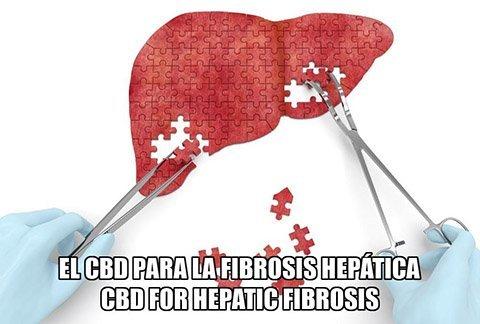 El CBD para la Fibrosis Hepática