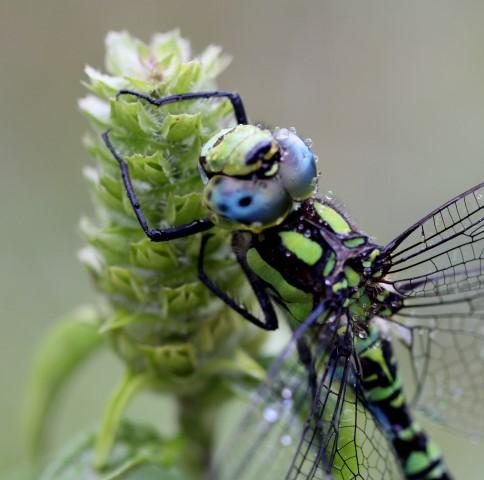 Vážky