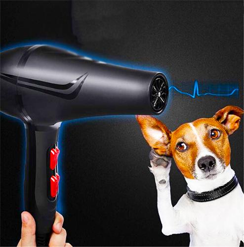 perro con secador sin ruido