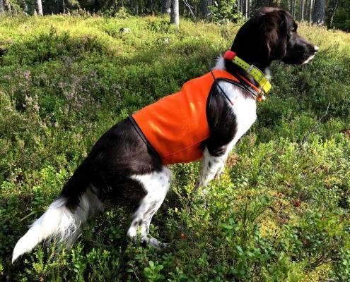 HP Hundefoder og udstyr til hunde