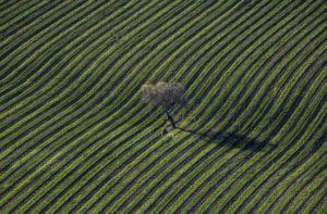 Santa Ynez Valley AVA, Santa Barbara | Winetraveler.com