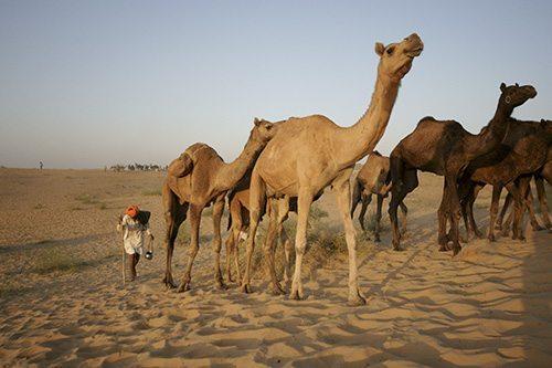 Sahara Photography Holiday Destinations