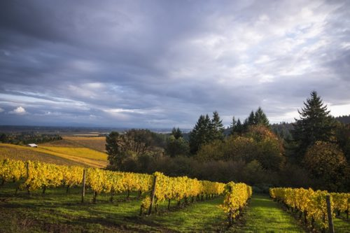 The Essential Willamette Valley Itinerary and Wine Region Guide | Winetraveler.com