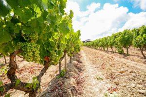 Vinho Verde Wine Styles & Tasting Notes   Winetraveler.com