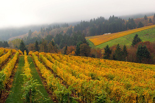 Willamette Valley Oregon is perhaps best known in the wine world for producing world-class Pinot Noir. But it's also a haven for outdoor lovers and those seeking unique local cuisine.
