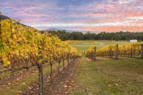 The Best Wineries To Visit in Australia's Yarra Valley | Winetraveler.com