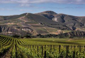 Best Wineries in Sta Rita Hills, Santa Barbara California | Winetraveler.com