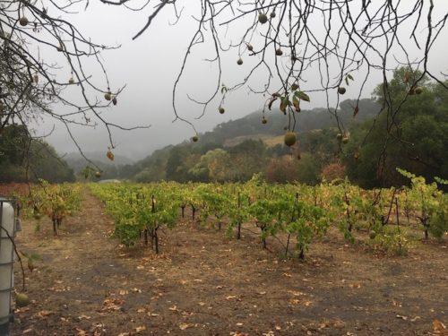Ravenswood Winery - Sonoma Valley - Best Zinfandel Ravenswood Winery