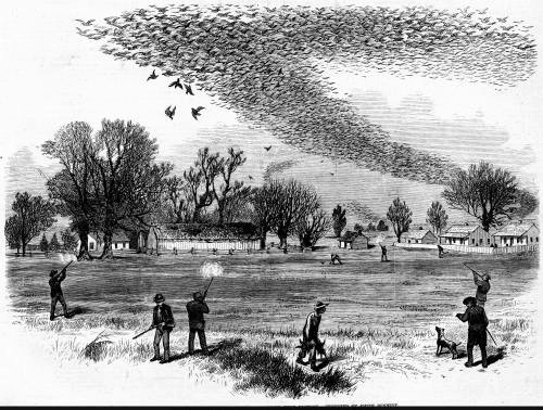 Shooting wild pigeons in north Louisiana.  Sketch by Smith Bennett published in Frank Leslie's Illustrated Newspaper, February 20, 1875. Source: Louisiana Digital Library.