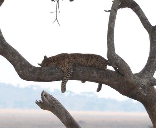 Seeing wildlife on a safari in Africa | Safari Planning Guide