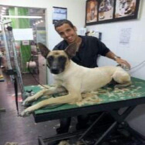 Malinoa dog haircut