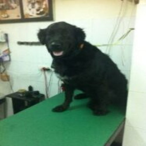 Picture of a medium-sized dog in a dog salon