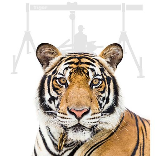 Tiger-Stapleranbaugeraete-Eyecatcher