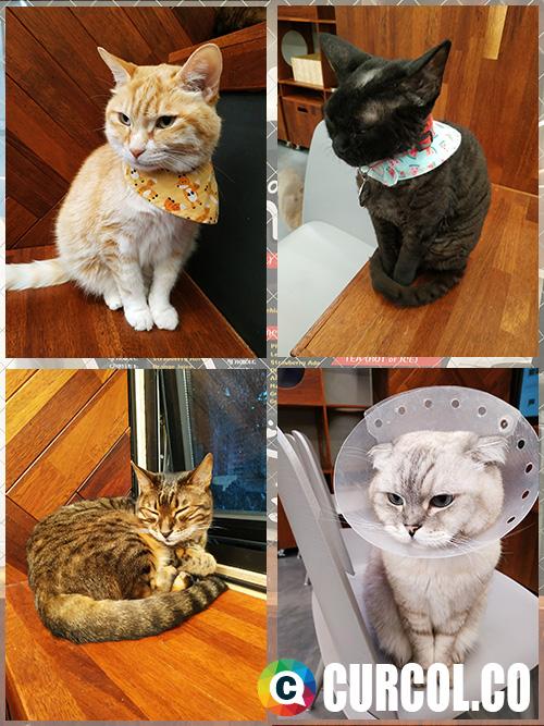 Deretan kucing 2