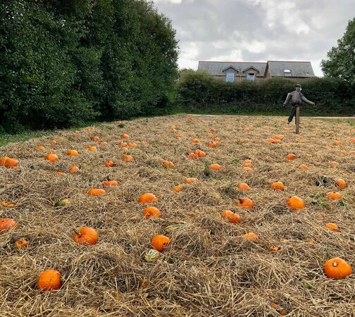 Halloween Activities and Where To Go Pumpkin Picking in Cornwall and Devon 2020
