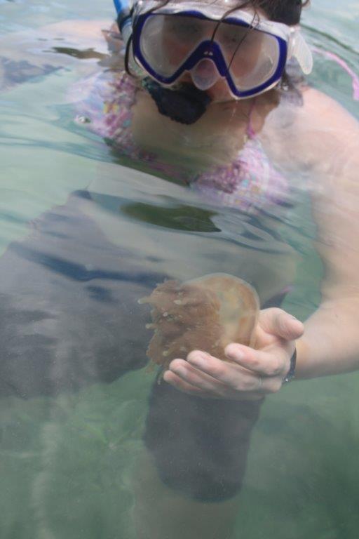 plavání s meduzama