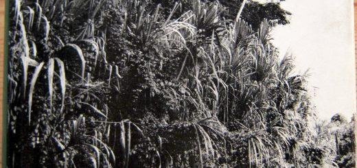 Titelbild- Ganz allein zum Amazonas - Rittlinger