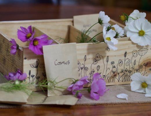 Réaliser une boîte à graines dans une caisse à vin.