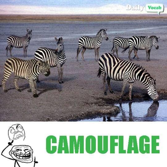 Camouflage meme with english hindi meaning