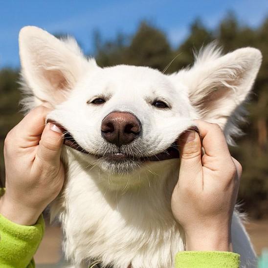 Keep Dog Smile