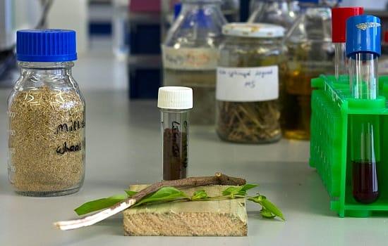 Биопластики разлагаются после использования