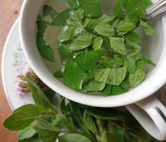 Photo of Oregano Tea Benefits and Some Healthy Tea Snacks