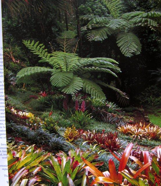 The Tropical Garden - William Warren