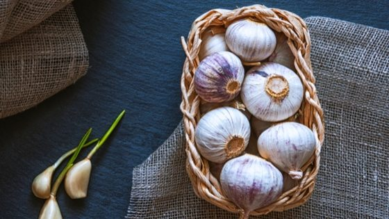 how to store garlic long term #garlic