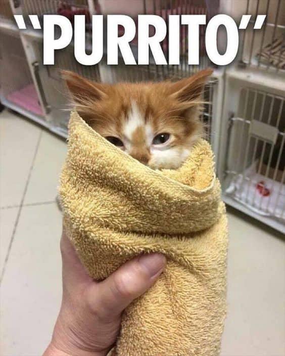 17 Funny Animal Memes