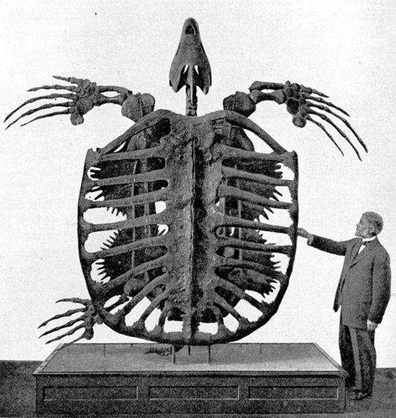 Archelon - Aller grootste dieren op een rij