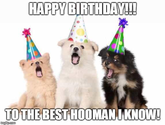 dogs birthday meme