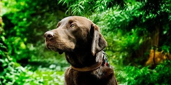 Our dog, Jackson (aka, Bubba)