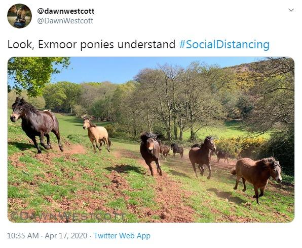 Social horse-tancing