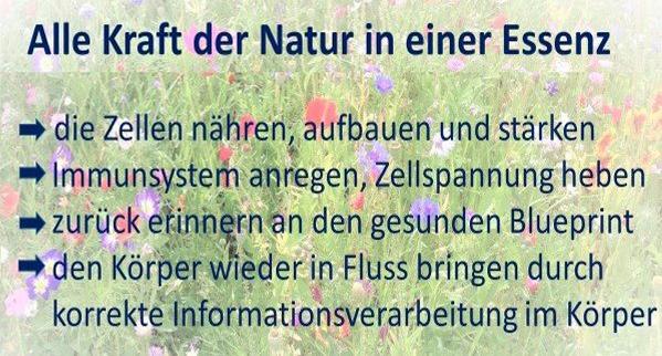 Unsere-Naturessenzen