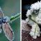 5 animale rezistente la frig, care sfidează moartea la temperaturi extreme featured_compressed