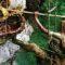 Mierea halucinogenă de Himalaya Deliciul pentru care nepalezii își pun viața în pericol featured_compressed