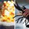 Războiul homarilor dintre Franța și Brazilia, un conflict armat pentru o delicatesă featured_compressed