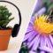 """Plantele nu au urechi, dar """"aud"""" mult mai bine decât credem noi featured_compressed"""