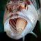 5 curiozități surprinzătoare din lumea animalelor FEATURED_compressed