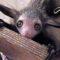 5 dintre cele mai ciudate animale din lume featured_comp