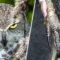 5 dintre cele mai periculoase păsări din lume FEATURED_compressed