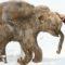 """Japonezii au făcut """"un pas semnificativ"""" spre clonarea mamuților lânoși featured_compressed"""