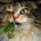 5 animale care se droghează. Vicioșii care nu cuvântă featured.fw_compressed