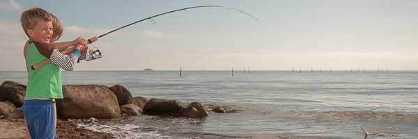 hornfisk i alle aldre
